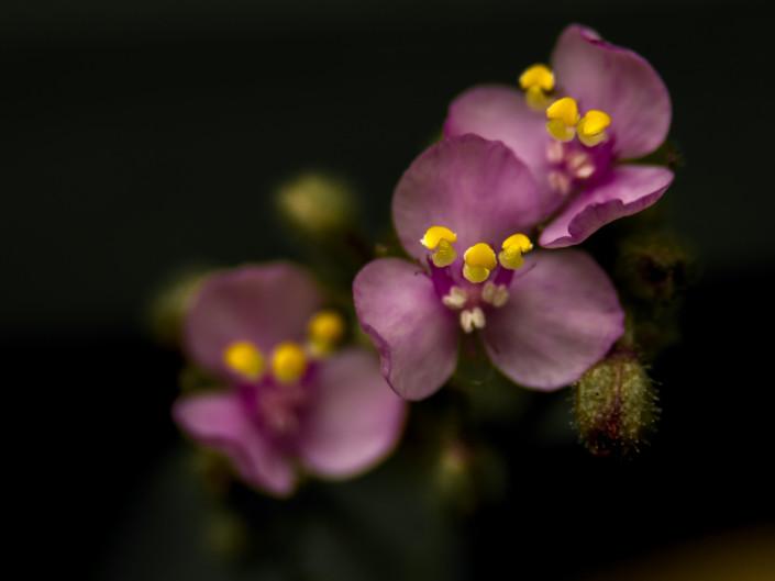 Yuyitos en flor