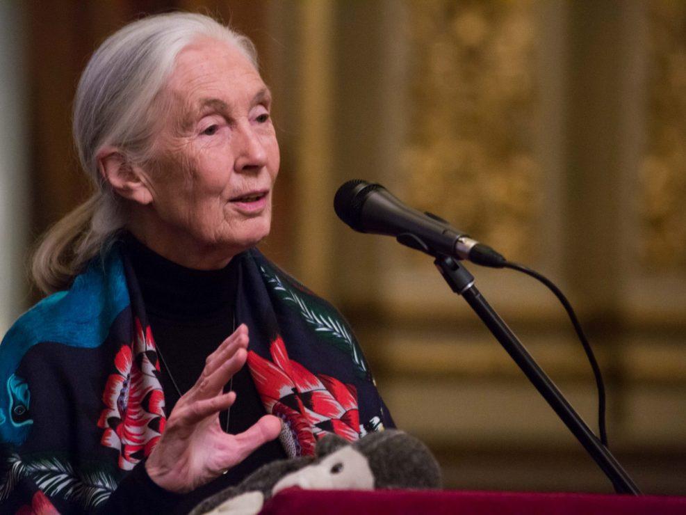 Instituto Jane Goodall Argentina
